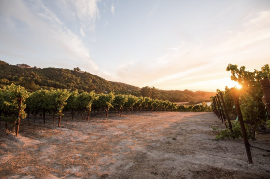 WHERE TO DINE IN SONOMA COUNTY